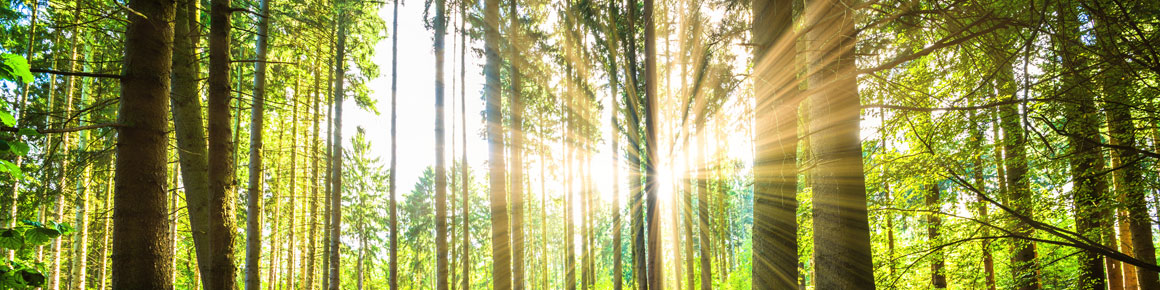 OHRpheus Umweltaktion Artikelbild Unterholz 01