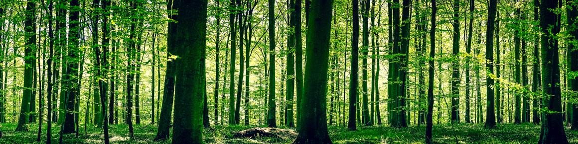 OHRpheus Umweltaktion Artikelbild Unterholz 02