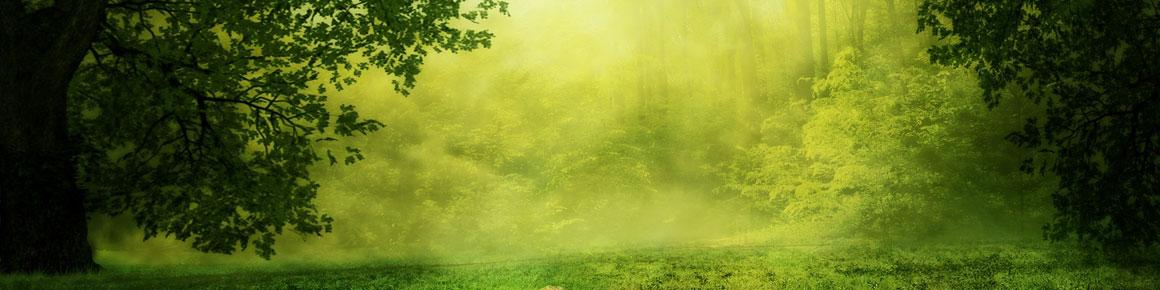 OHRpheus Umweltaktion Artikelbild Wald